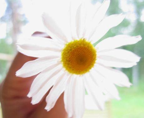 Se, että voin istuttaa siemenen ja se tulee kukka, jakaa vähän tietoa ja se tulee toisen omaksi, lähettää jolle kulle hymyn ja saada hymyn vastineeksi, ovat minulle alituisia henkisiä harjoituksia. -Leo Buscaglia