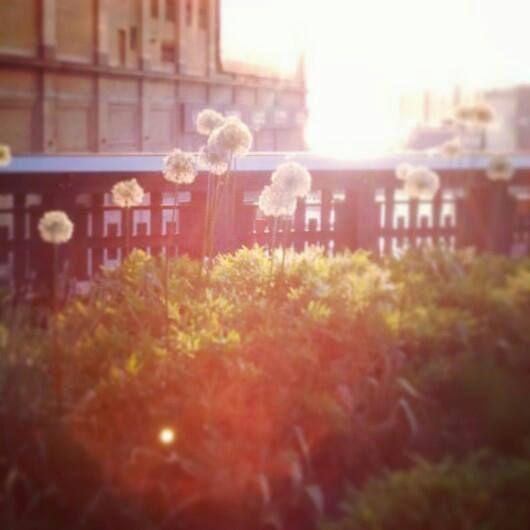 Maria Piritta photo creds highline may 2013