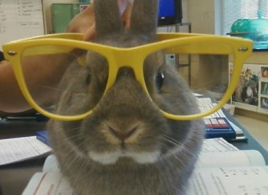 Bunny_with_glasses 2